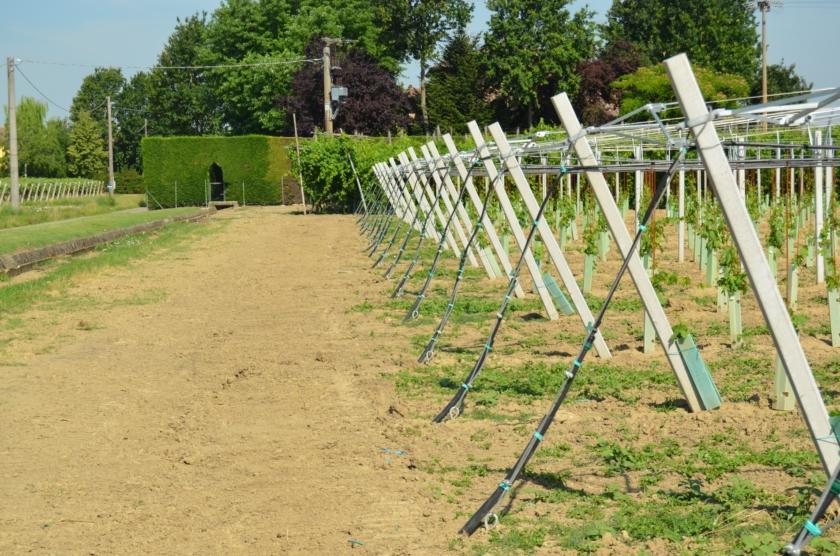 Impianti di irrigazione e fertirrigazione agrimpianti for Irrigazione vigneto